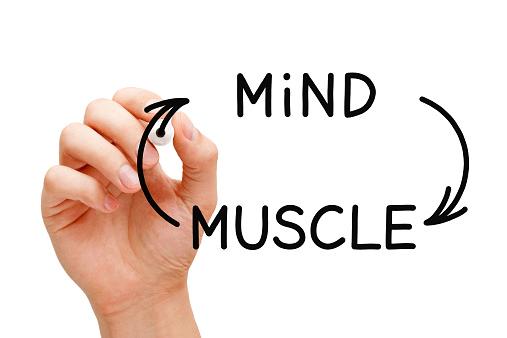 שפר את חיבורי שריר המוח